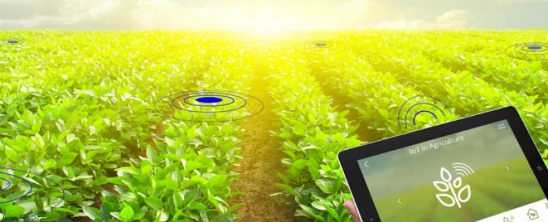 IBM Watson in agriculture
